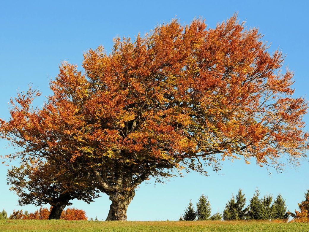 Herdenkingsboom planten na overlijden